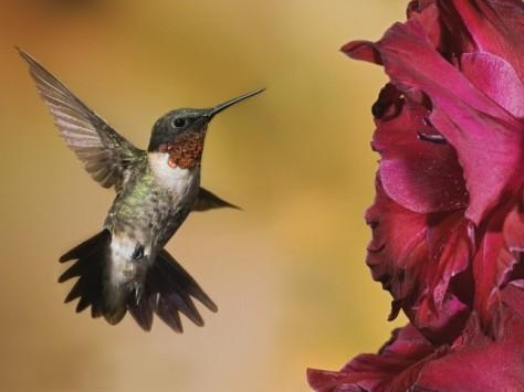 colibriel canto delcolibriwordpress