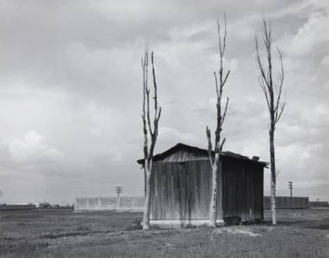 manuel álvarez bravo tres árboles y una casa